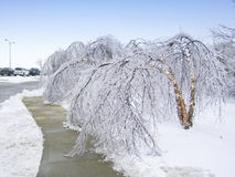 Trees bent over from the weight of the ice Stock Photography