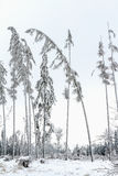 The trees bent under the weight of snow and frost Stock Photography