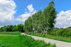 Trees (birches) near narrow road leading to village Stock Photos