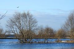 Trees, bird and beaver near river Sysa, Lithuania Stock Photography