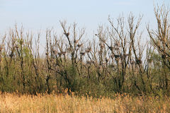 Trees with bird nests Stock Photography