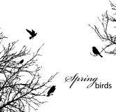 Trees and birds Royalty Free Stock Photos