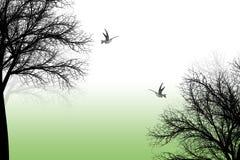 Trees and birds Royalty Free Stock Photo