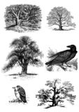 Trees and birds set of clip art. Trees and bords set of clip art royalty free illustration