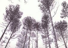 Trees in Biro. Hand drawn Illustration of  trees in forest Royalty Free Stock Image
