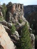 Trees in Black Canyon Colorado Stock Photos
