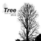 Trees black and white. Royalty Free Stock Photos