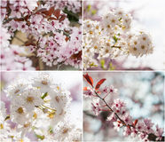 Trees in bloom Stock Image