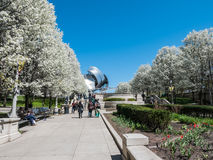 Trees in bloom in Millennium Park, Chicago Royalty Free Stock Photography