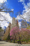 Trees Blossom in City Hall Park in Lower Manhattan Stock Images