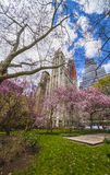 Trees in Blossom in City Hall Park in Lower Manhattan Royalty Free Stock Photo