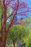 Trees in blossom in Love Park in Philadelphia PA Stock Image