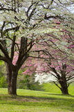 Trees blossoming in Spring Stock Images