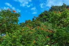 Trees in blow along the road to hana maui hawaii Royalty Free Stock Photography