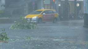 Trees blowing in surge of typhoon Wind and Rain stock video