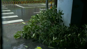 Trees blowing in surge of typhoon Wind and Rain. New Taipei City, Taiwan.  September 27, 2016: Trees blowing in surge of typhoon Wind and Rain in city streets stock video footage