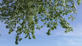 Trees blowing in the wind stock footage