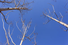 Trees Blue Climate Royalty Free Stock Photography