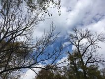 Trees, blue cloudy sky. Early autumn forest. Trees, blue cloudy sky. Early autumn forest, Vladivostok countryside Stock Images