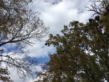Trees, blue cloudy sky. Early autumn forest. Trees, blue cloudy sky. Early autumn forest, Vladivostok countryside Royalty Free Stock Photography
