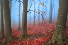 Trees in blue mist during autumn in the forest Royalty Free Stock Photography