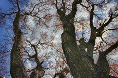 Trees, blue skies & white clouds Royalty Free Stock Photography