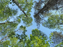 Trees and blue sky Stock Photography