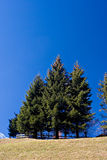 Trees and Blue Sky royalty free stock image