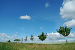 Trees and blue sky Stock Images
