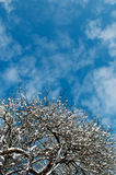 Trees and blue sky. Winter snow trees and blue sky Stock Photography