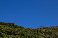 Trees blue sky. Trees and blue sky background Royalty Free Stock Photos
