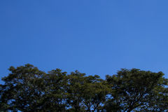 Trees blue sky. Trees and blue sky background Stock Photo