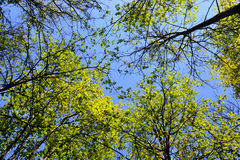The trees on blue sky background Royalty Free Stock Photos
