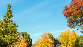 Trees with blue Sky Background Royalty Free Stock Image