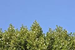 Trees and the blue sky Royalty Free Stock Images