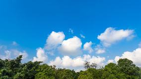 Trees  with blue sky and cloud Royalty Free Stock Photography