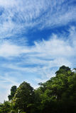 Trees and blue sky with clouds stock photo
