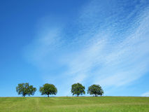 Trees with blue sky and clouds (31). Trees with blue sky and clouds in front a green meadow Royalty Free Stock Photos
