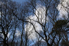 Trees and a blue sky Royalty Free Stock Image