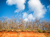 Trees and blue sky with clouds Royalty Free Stock Photo