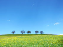 Trees with blue sky (21) Royalty Free Stock Photography