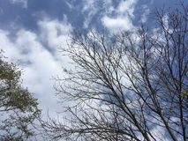 Trees, blue sky. Early autumn, bare branches. Vladivostok nature Royalty Free Stock Photography