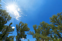 Trees on Blue Sky Stock Photography