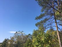 Trees, blue sky. Trees and blue sky. Forest, nature Stock Photography