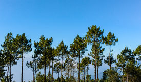 Trees and blue sky Royalty Free Stock Images