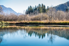 Trees and blue sky reflected in a tranquil lake Royalty Free Stock Photography