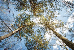 Trees and blue sky. Stock Images