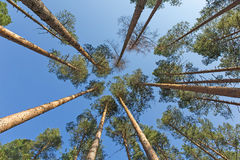 Trees and blue sky Stock Photos