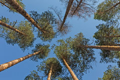 Trees and blue sky Royalty Free Stock Photo