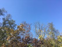 Trees, blue sky. Early autumn forest Royalty Free Stock Image